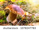 mushroom on a clearing in an... | Shutterstock . vector #1078247783