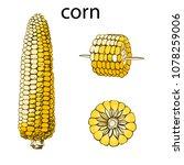 corn  maize or zea mays ... | Shutterstock .eps vector #1078259006