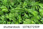 vertical garden with tropical... | Shutterstock . vector #1078272509