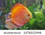 red and white discus in... | Shutterstock . vector #1078322948
