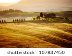 Typical Tuscany Landscape  Italy