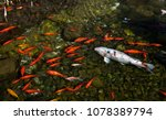 koi gold fish asia pond see... | Shutterstock . vector #1078389794