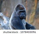 gorilla in the jungle | Shutterstock . vector #1078403096
