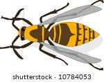 bee | Shutterstock .eps vector #10784053