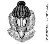 monkey  baboon  dog ape  ape... | Shutterstock .eps vector #1078446683