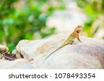 Oriental Garden Lizard  Easter...