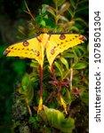 Small photo of Aquatic moth image