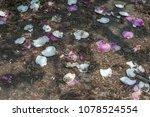 scruffy magnolia. shabby flower ...   Shutterstock . vector #1078524554