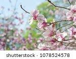 scruffy magnolia. shabby flower ...   Shutterstock . vector #1078524578
