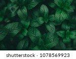 green mint leaves pattern... | Shutterstock . vector #1078569923