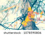 branch with a few autumn leaves ... | Shutterstock . vector #1078590806
