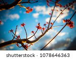 spring blooms with fluffy clouds | Shutterstock . vector #1078646363