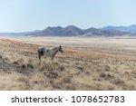 onaqui herd wild mustangs in... | Shutterstock . vector #1078652783