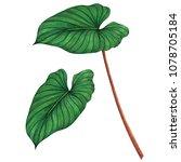 watercolor painting green... | Shutterstock . vector #1078705184