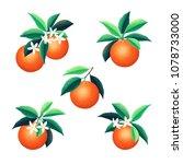 orange fruits  leaves and... | Shutterstock .eps vector #1078733000