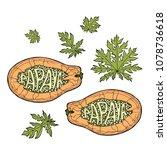 papaya sketch lettering....   Shutterstock .eps vector #1078736618