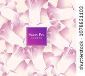 sweet pea vector bakcground | Shutterstock .eps vector #1078831103