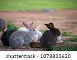 this is a rabbit sitting on... | Shutterstock . vector #1078833620