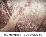 Small photo of Woman hand touches the tender petals of a fluffy pink flowers on blossom branches of a peach trees. Blooming spring orchard. Old paper texture. Vintage style