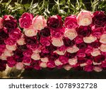 Many Roses In Different Shades...