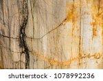 petrified tree texture