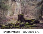 Old Tree Stump In Woodland ...