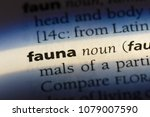 fauna word in a dictionary.... | Shutterstock . vector #1079007590