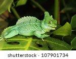 close up of green basilisk... | Shutterstock . vector #107901734