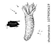 wasabi root vector drawing.... | Shutterstock .eps vector #1079092619