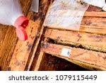 varroa mites extermination in... | Shutterstock . vector #1079115449