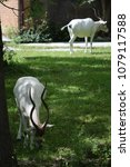 Small photo of Addax in Zoo