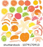 vector illustration of citrus... | Shutterstock .eps vector #1079170913
