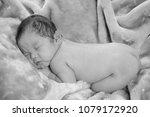 cute little newborn baby curled ... | Shutterstock . vector #1079172920