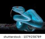 Small photo of Venomous Viper Snake - Reptile Series