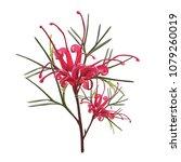 australian red grevillea native ... | Shutterstock .eps vector #1079260019