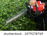 home and garden concept. hedge... | Shutterstock . vector #1079278769