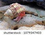 Hermit crabs onthe rocks ...
