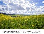 scenic view of field of... | Shutterstock . vector #1079426174