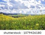 scenic view of field of... | Shutterstock . vector #1079426180