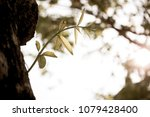 fresh leaf close up with... | Shutterstock . vector #1079428400