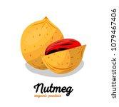 nutmeg in cartoon style. nut...   Shutterstock .eps vector #1079467406