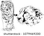 vector drawings sketches... | Shutterstock .eps vector #1079469200