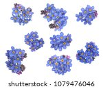 groups of forget me not flowers ... | Shutterstock . vector #1079476046