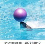 Bottlenose Dolphin Playing With ...