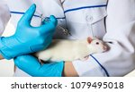 woman in uniform injects... | Shutterstock . vector #1079495018