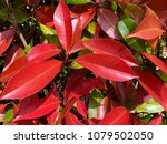 backround from the red and... | Shutterstock . vector #1079502050
