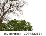 the dead tree on top and the... | Shutterstock . vector #1079523884
