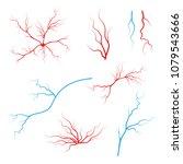 human blood arteries. vein... | Shutterstock .eps vector #1079543666