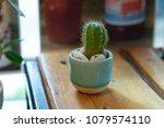 cactus in ceramic pot on wooden ... | Shutterstock . vector #1079574110