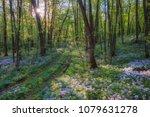 majestic spring landscape  wild ... | Shutterstock . vector #1079631278
